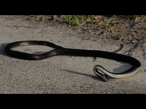Snake Suicide | Amazing Video | Don't Miss It | Real Video