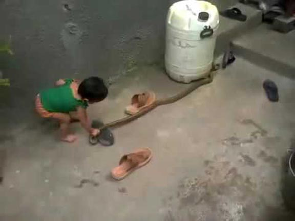 When 2 year child caught a snake, see what happened, viral video