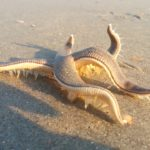 Incredibly Interesting Facts About Starfish, viral video