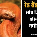 Interesting facts about indian Red sand boa snake